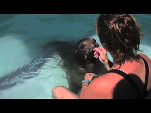 Marine Mammal training-Desensitization