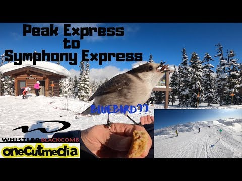 Take A Cruise From The Peak To Symphony At Whistler On A Bluebird Day!  Lets Go Skiing  Onecutmedia