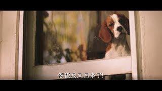【狗狗的旅程】特技篇 - 5月17日 暖心獻映