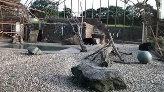 Lake Tobias Wildlife Park - Meet The Bears 2018