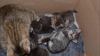 Котята смешанной породы в добрые руки  Рождены 9 мая!