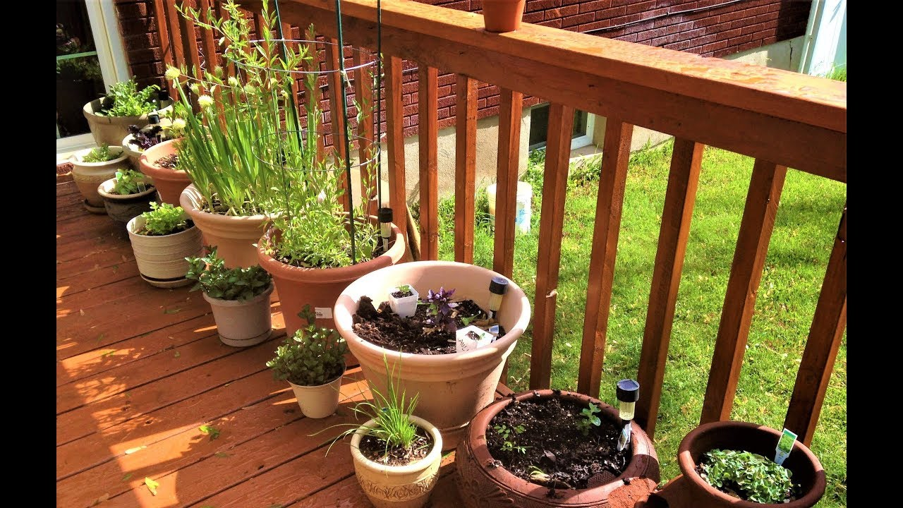 Bag of tips and tricks for your garden - YouTube