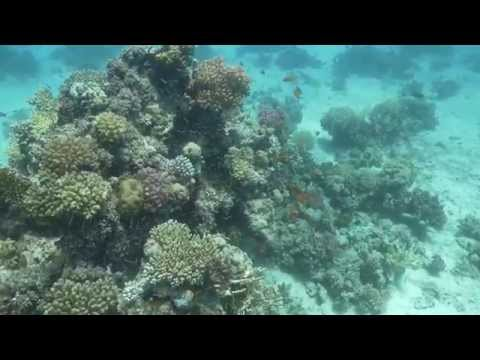 Hurghada Red sea diving July 2015