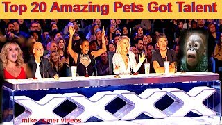 Download Best Top 20 Amazing Pet Animals Got Talent Auditions! Golden AGT - BGT Moments! Funny Dogs Cats! Mp3 and Videos