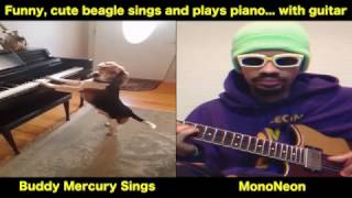 MonoNeon: Funny, cute beagle sings and plays piano... with guitar