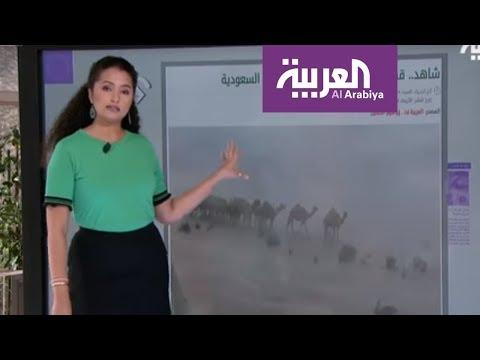 العربية.نت.. قصة إبل هوليوودية وزياد برجي يصالح شيرين  - نشر قبل 5 ساعة