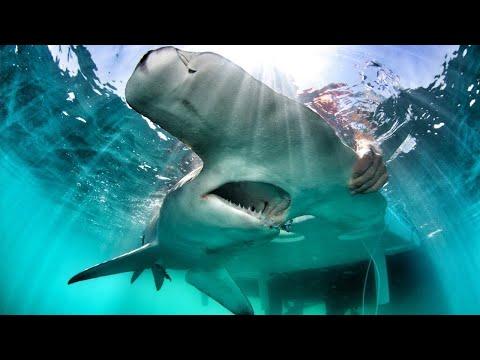 Do sharks use marine protected areas?