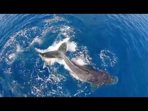 Keith  O' Sullivan  -  Whale Dance