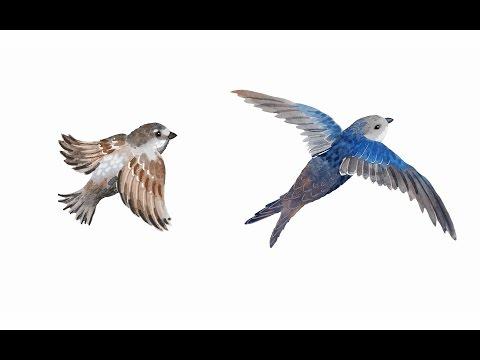 15. Птицы. Часть 2