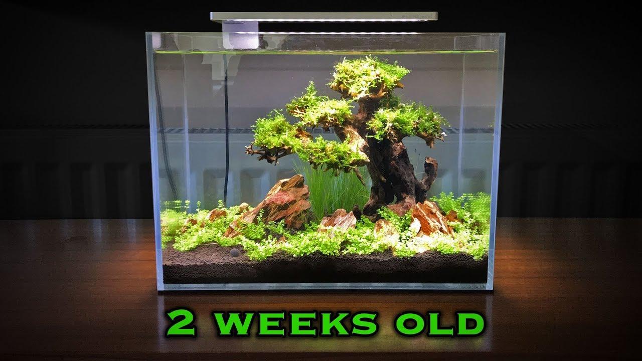 Bonsai Tree Aquascape Update - YouTube