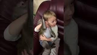 Обезьяна и малыш( нежная дружба)