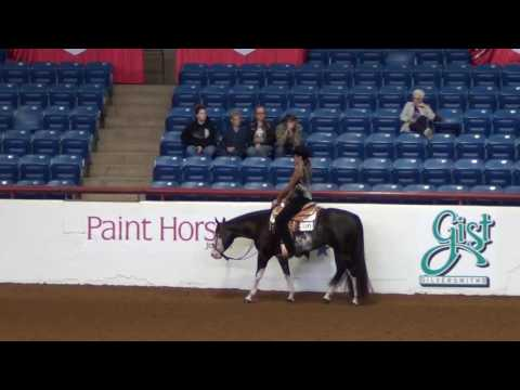 Ocean Front Property- 2013 APHA Mare For Sale $40,000