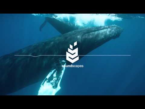 Best Meditation 2016 by SoundScapes - Underwater Worlds [Relaxation Music, Study Music, Zen Music]