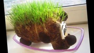 Оригинальный сувенир своими руками  Травянчик(Оригинальный сувенир Травянчик. Живчик –это живое растение, у которого на голове или теле при поливе водо..., 2016-01-13T14:12:36.000Z)
