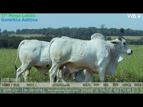 LOTE 108 - DUPLO - REMC A 1852, REMP 619 - 17º Mega Leilão Genética Aditiva 2020