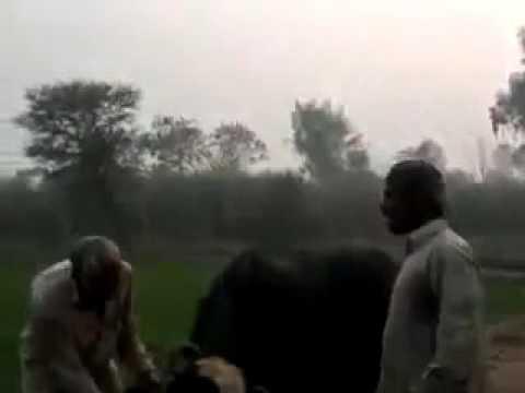 Funny mandi bahauddin