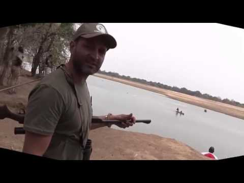 Hunters killing hippos in Zambia illegal hunting
