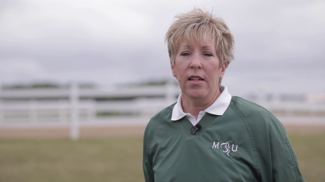 Horse Management Certificate Program at MSU Institute of Agricultural Technology