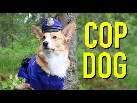 IF DOGS WERE COPS - Topi the Corgi