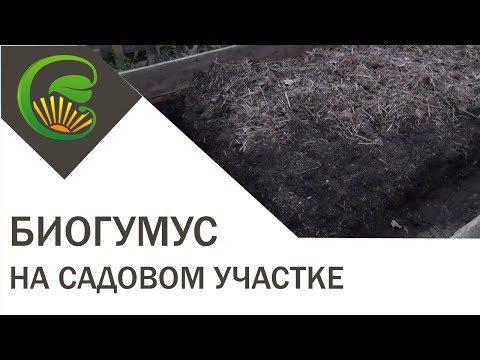 Как использовать биогумус на огороде
