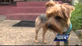 Yorkie For Sale Sparks Controversy; Owner Responds