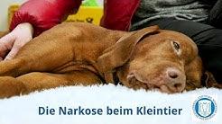 So verläuft die Narkose beim Hund