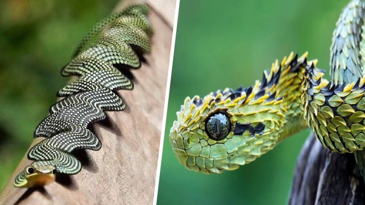 9 Самых Редких Змей в Мире