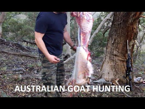 Australian bush hunting 4 Goats. Field dressing ATV butchering