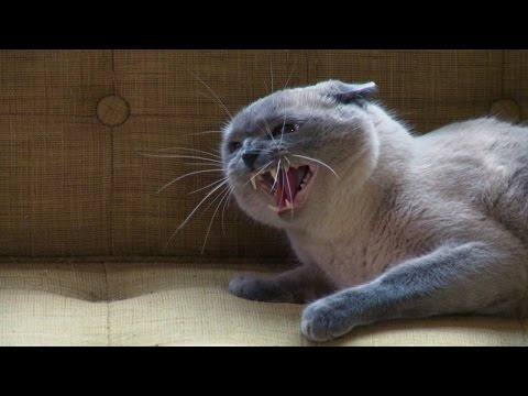 This Cat is a Real B*ll Buster | My Cat From Hell