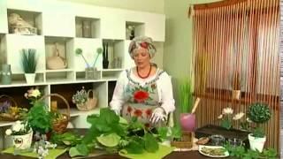 видео Выращивание бадана толстолистного на даче (55 фото): из семян, посадка, полив, подкормка, уход