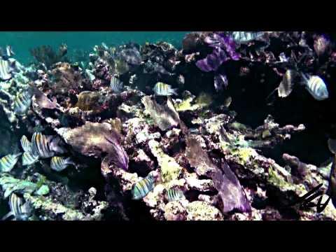 Mesoamerican Barrier Reef - YouTube HD