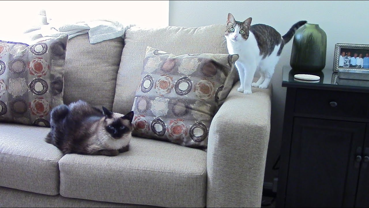 How To Protect Fabric Sofa From Cats