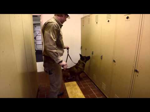 Crosby Energy Services- Security
