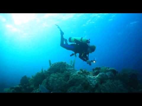 Sylvia Earle: A Life Lived Under Water to Preserve Our Seas