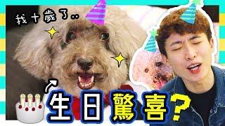 【🐶MUFFIN生日驚喜!🎂】狗狗10歲大壽~到底準備了什麼?😁(中字)