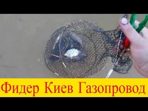 Рыбалка в Киеве Оболонь Газопровод  плотва густера на фидер 29.03.2020