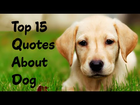 Quotes About Dogs | Best 15 Dog Quotes For People Who Love Dogs Youtube