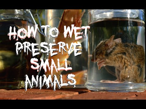 How To Wet Preserve Small Animals