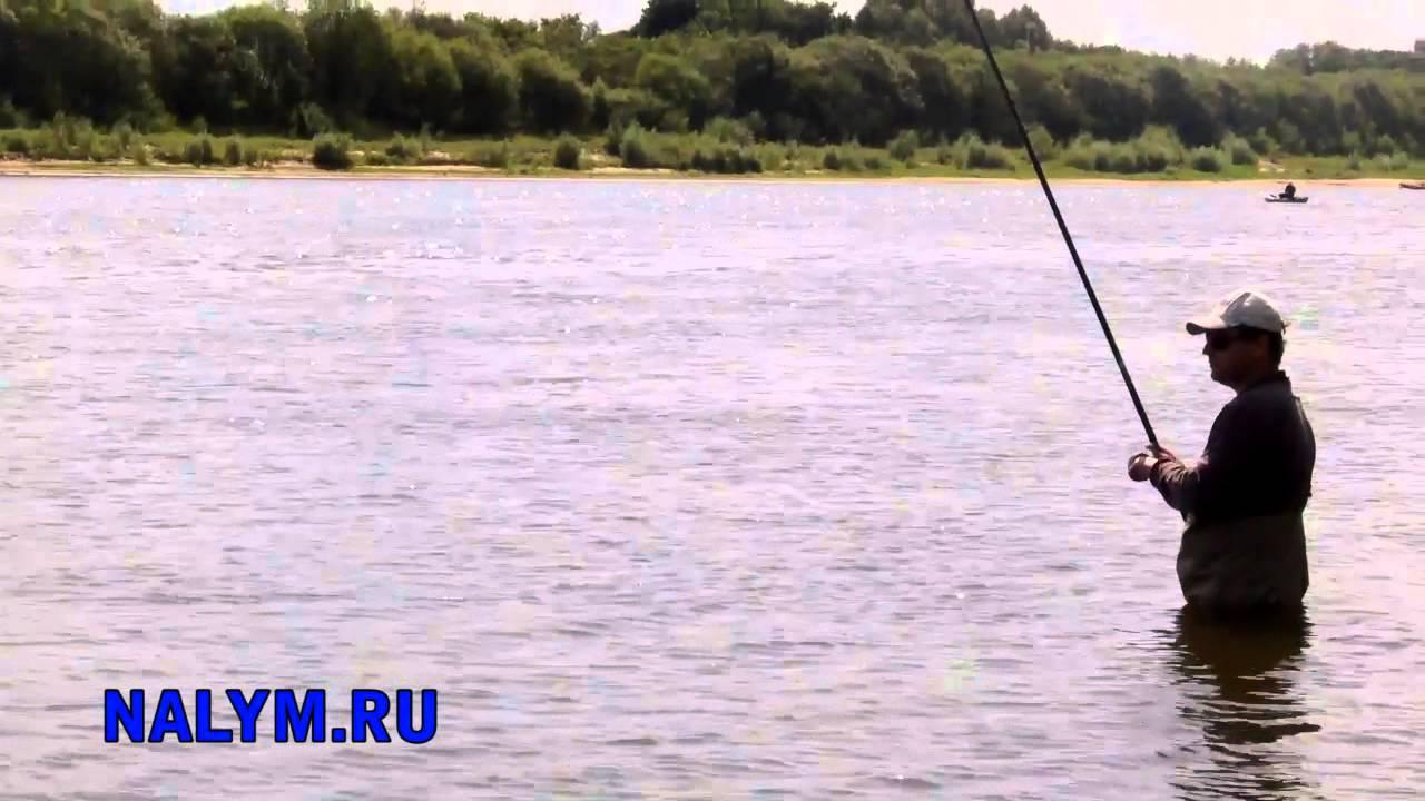 Рыбалка болонской снастью осенью