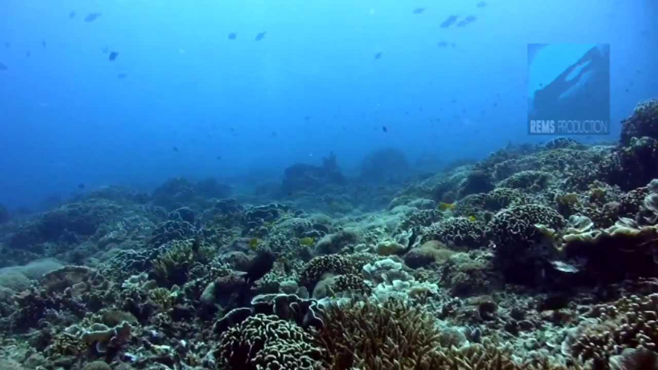 Diving manta point gili islands lombok indonesia youtube - Manta dive gili ...