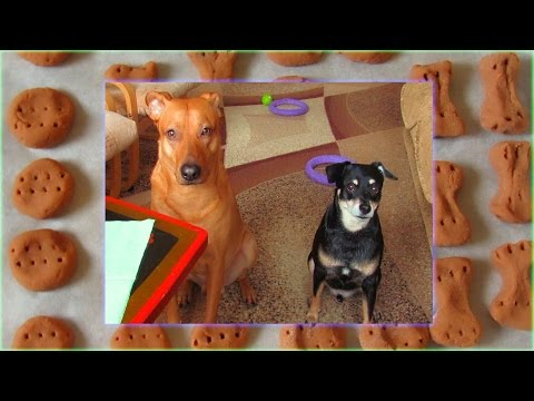 How To Make Three Ingredients Homemade Dog Treats -  Easy Recipe Liver Training Cookies For Dogs