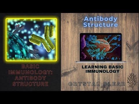 Basic Immunology: Antibody Structure & Function