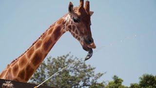 Aussie zoo animals try to beat the heat