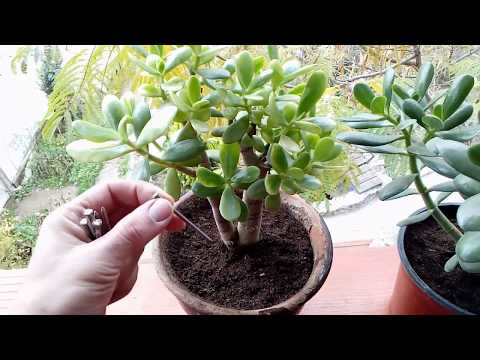 This trick helps your Plant to grow fast