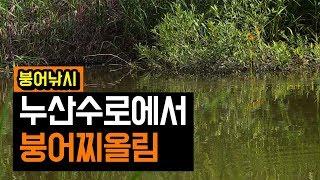 김포 누산리수로 | 자연지 붕어낚시 | 찌올림이 좋은 붕어들 | 챔질연습