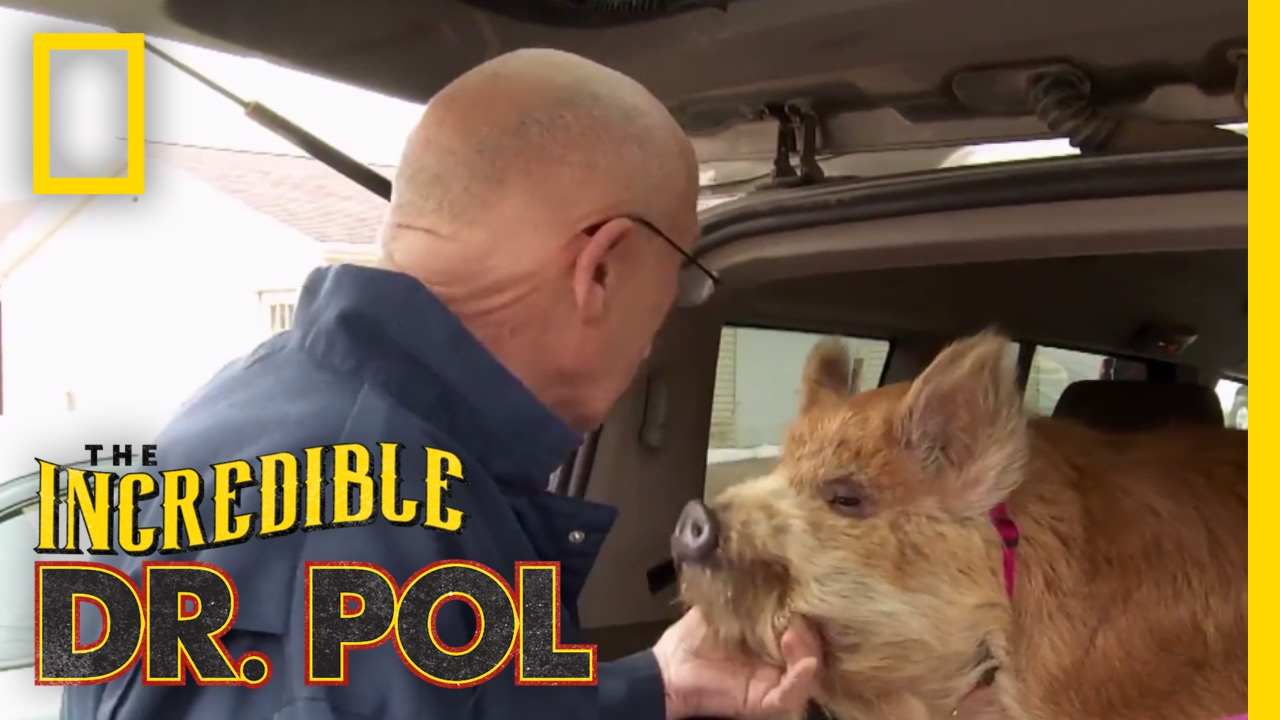 Dr  Pol's Top 100 Moments | The Incredible Dr  Pol