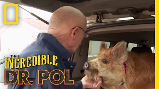 Dr. Pol's Top 100 Moments | The Incredible Dr. Pol