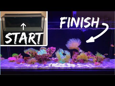 How To Setup A Saltwater Aquarium: Step By Step