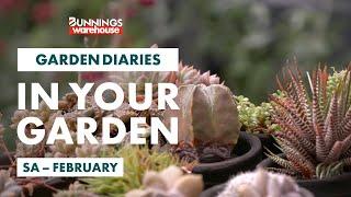 Gardening in February | South Australia | Bunnings Garden Diary