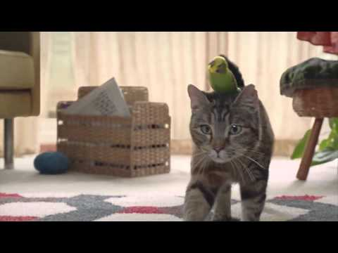 Freeview (UK) Cat & Budgie February 2014